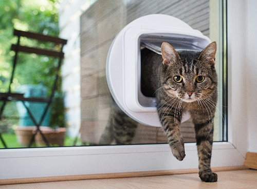 AI Controlled Cat Flap