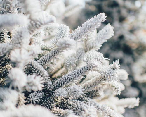 Plants to Get Fantastic Winter Garden